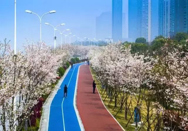 最美樱花跑道